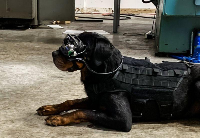 Amerykańska armia wyposaży psy w gogle AR