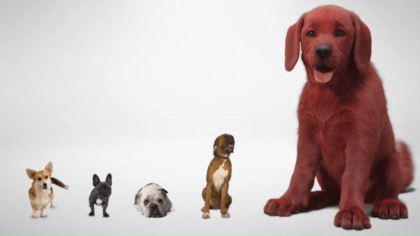 Clifford wielki czerwony pies w drodze na ekran. Pierwszy teaser filmu