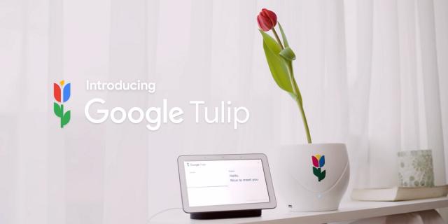 Google Tulip – ta doniczka pozwoli ci porozmawiać z kwiatami
