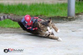 Baby Spider-Man i koty. Zobacz świetną galerię
